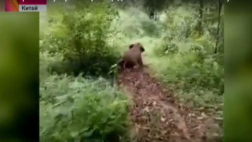 Обаятельный ребенок: слоненок катается с грязевой горки