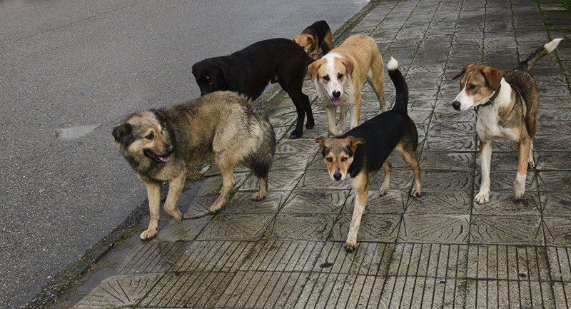 В Полтаве трое полицейских с трудом разогнали стаю бродячих псов, атаковавших женщину