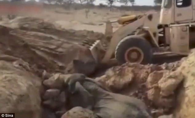 В Танзании китайская строительная фирма откопала слонов, угодивших в песчаную яму