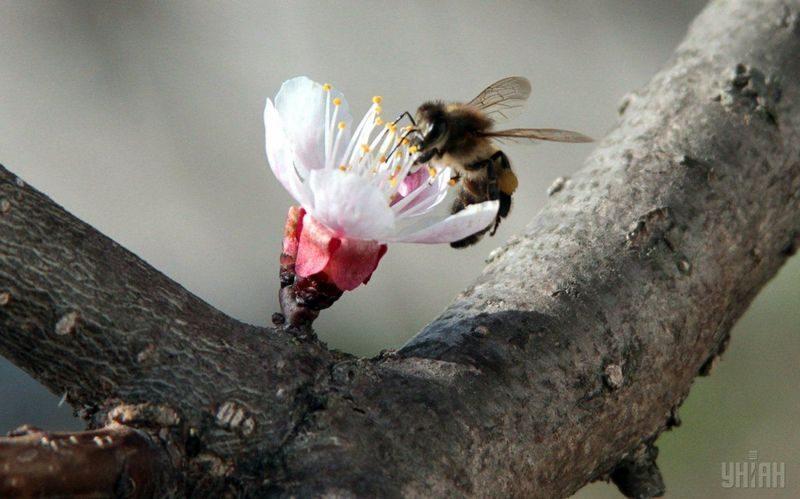 В Баварии требования, изложенные в петиции «Спасите пчел!», станут законом