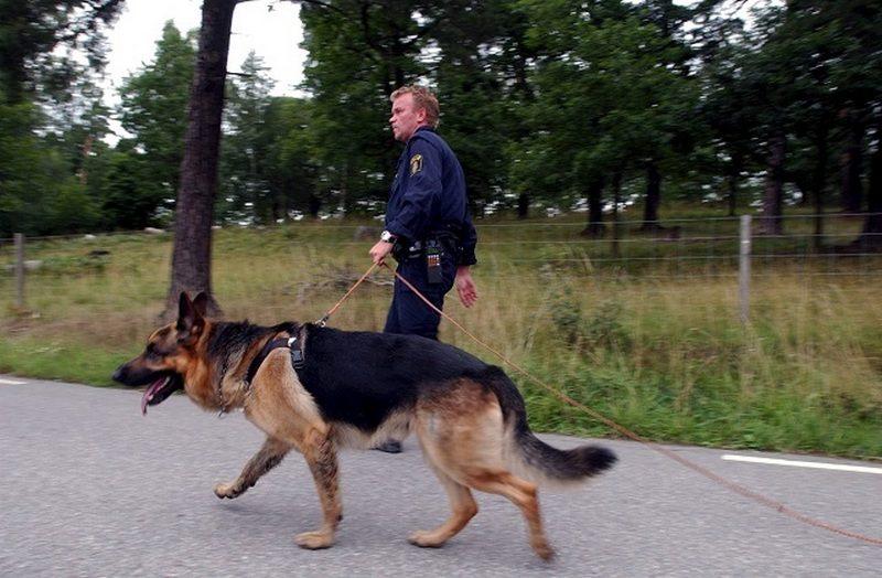 Шведские военные закупили 59 собак за 1 млн евро