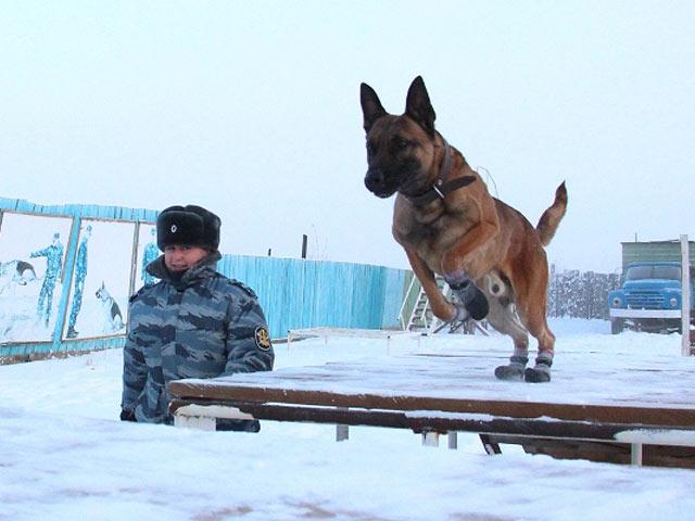В РФ клонированных собак используют для охраны зэков