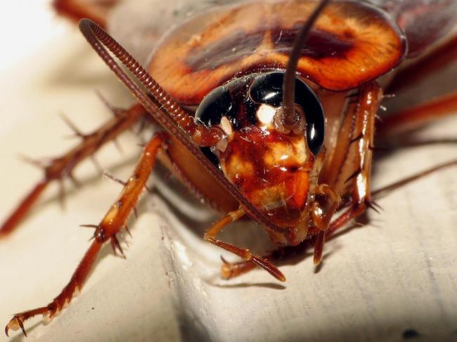 Швеция разрешила продажу насекомых в продуктовых магазинах