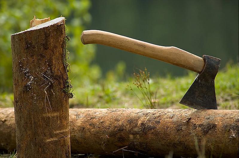 На Николаевщине «черный лесоруб» заплатит штраф в 17 тыс.грн. и возместит ущерб в 27 тыс.грн.