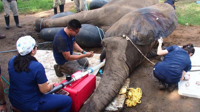 30 человек приняли участие в оказании стоматологической помощи слону