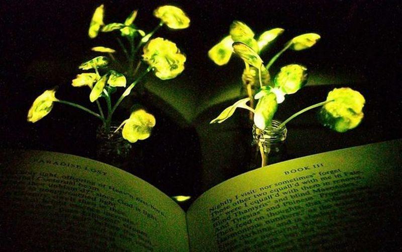 """Американские ученые скрестили растения и светлячков, получив светящиеся """"гибриды"""""""