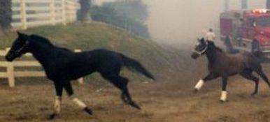 В США во время пожара на ипподроме пришлось выпустить в поля сотни элитных лошадей, десятки — погибли