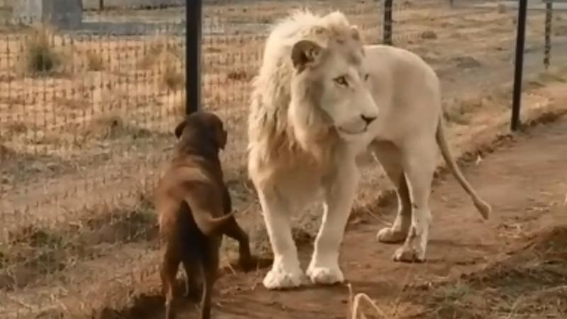 Конфискованных животных больше не будут продавать на аукционах: Кабмин разрешил отдавать их бесплатно в приюты и зоопарки