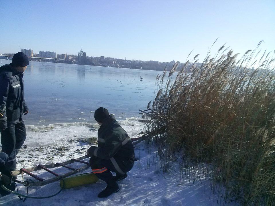 Спасатели выручили двух лебедей, которые примерзли ко льду (фото)