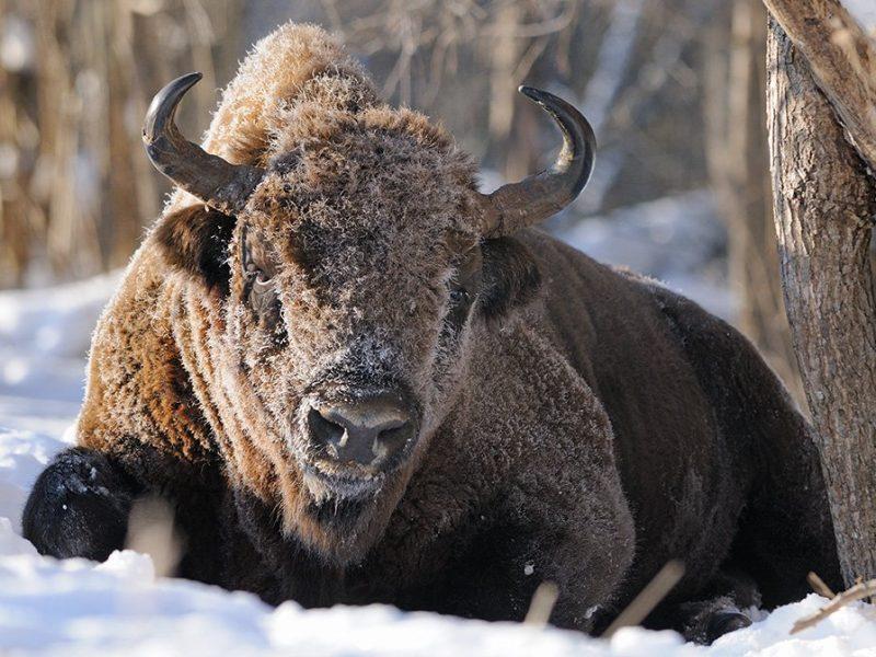 Аномальная зима: в заповеднике Аскания-Нова настоящий бэби-бум