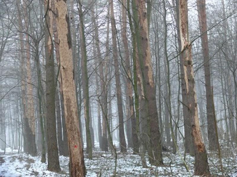 Арбитры признали, что Украина имеет право ограничивать экспорт леса при определенных обстоятельствах