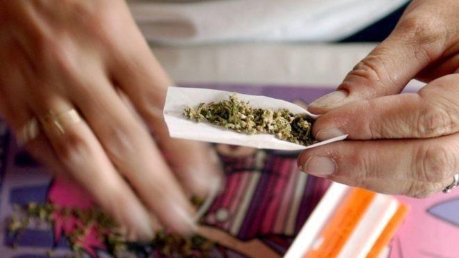 Не зерном единым: в Тернополе мыши съели вещдоки, начали с марихуаны