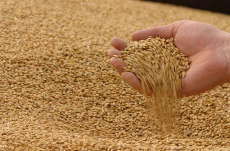 Украина намерена продать пшеницы на $6 млрд за год