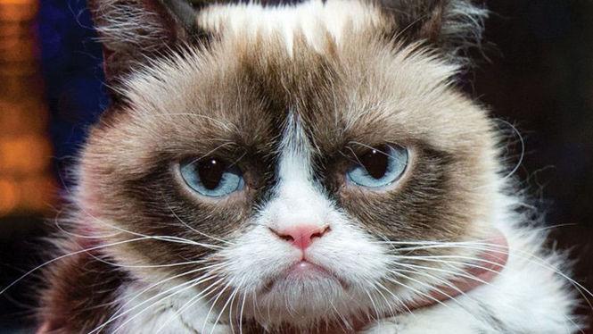 «Пояснить ничего не смог», — в России следователи привлекли в свидетели кота (ФОТО)
