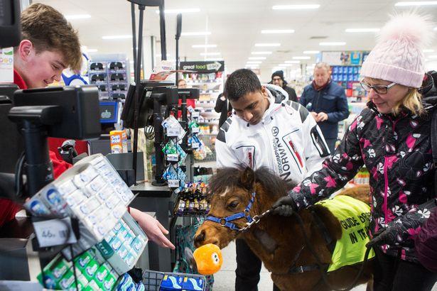 У нас такую ситуацию трудно представить: англичанин со своим конем-поводырем прошелся по улицам и магазинам Британии