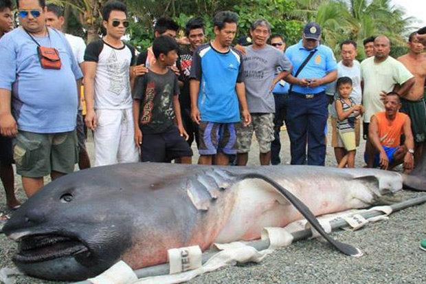 Не к добру. На берег выбросило глубоководную большеротую акулу. Филиппинцы предсказывают катастрофу