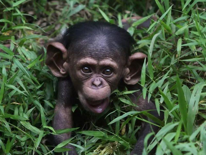 В Индии обезьяны остались без еды из-за коронавируса (ФОТО)