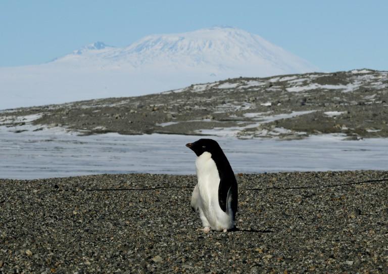 Ученые обнаружили вАнтарктиде 1,5 млн неизвестных прежде пингвинов