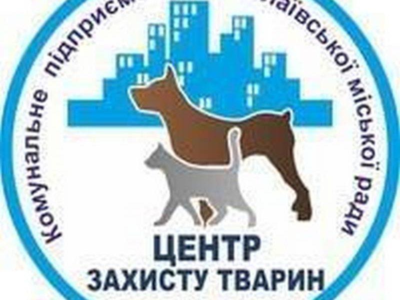 Исполком Николаевского горсовета согласовал программу по бездомным животным от КП «Центр защиты животных»