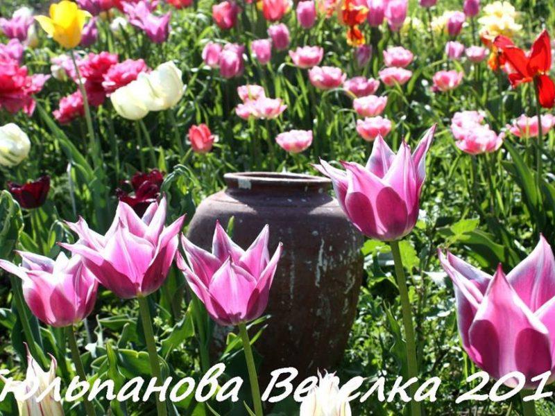 В Николаеве «Тюльпановая радуга» распахнет свои двери в четвертый раз