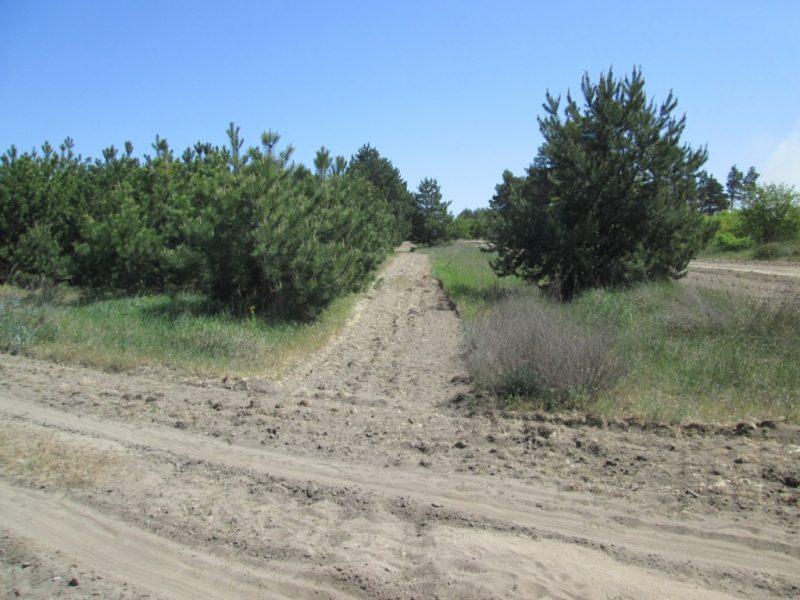 Чтобы уберечь Балабановский лес от пожаров, создано 80 километров минерализованных полос