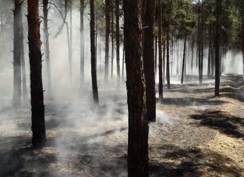 Опять поджог: в Матвеевском лесу под Николаевом сгорело 2300 кв.м подстилки