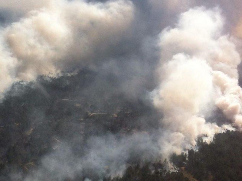 На Херсонщине пожар охватил 100 гектаров леса