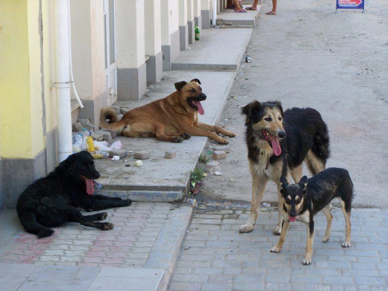Бродячие собаки не дали приземлиться в аэропорту Симферополя российскому самолету