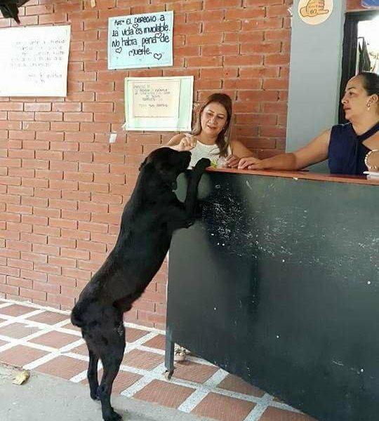 В Колумбии пес научился «расплачиваться» за угощения листьями с деревьев