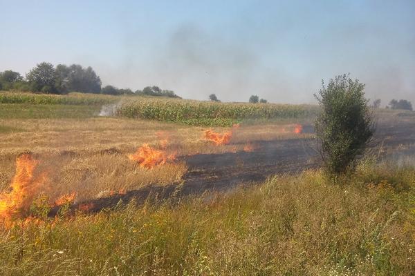 В Херсонской области сгорели 170 гектаров пшеницы