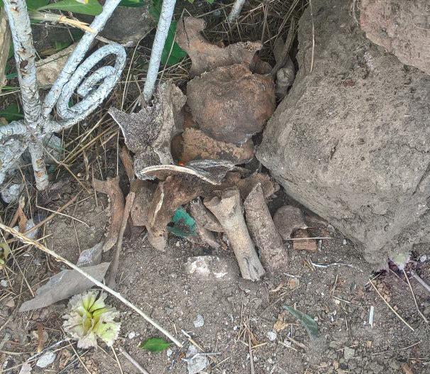 При уборке несанкционированной свалки на одном из кладбищ Николаева были найдены человеческие останки