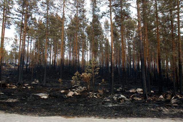 Небывалые лесные пожары в Швеции – до сих пор горят 25 тысяч гектаров леса