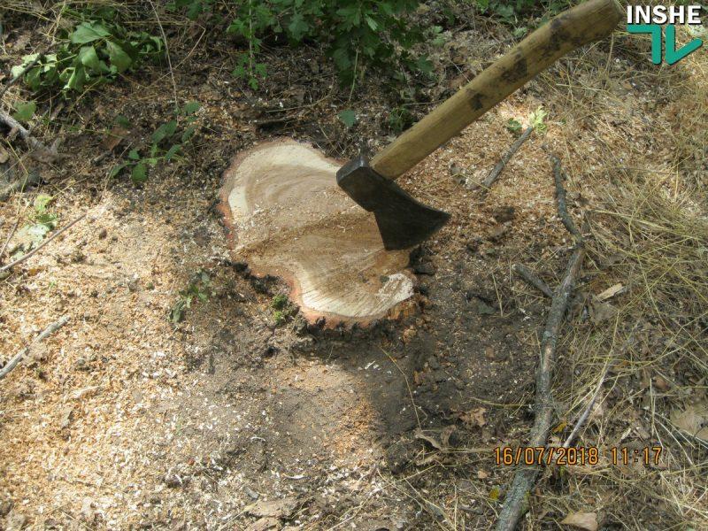 Сельсовет в Доманевском районе заявил о незаконной вырубке дубов и ясеней на территории лесополосы