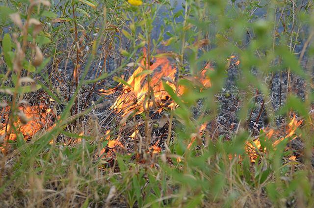 Десятки отдыхающих вместе с лесничими потушили пожар на Кинбурне