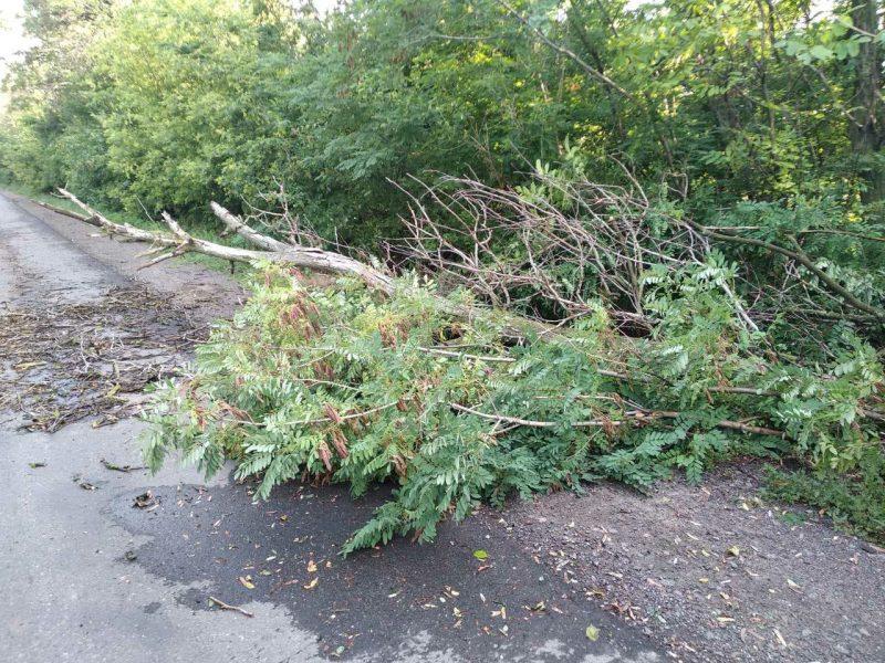 Поваленное дерево перекрыло движение трассы Ульяновка – Николаев