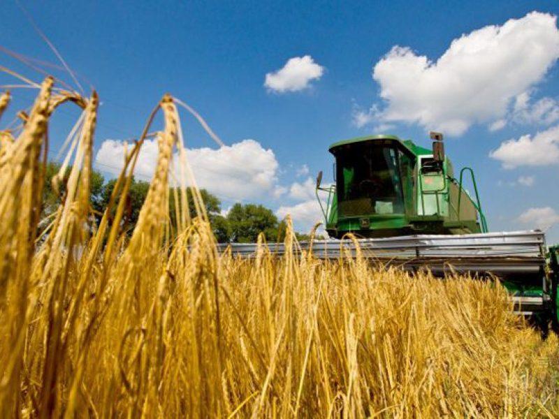 На Николаевщине намололи 1,7 миллиона тонн зерна. Средняя урожайность выше, чем год назад