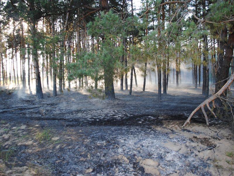 На Харьковщине на грибников упало дерево, один из них погиб
