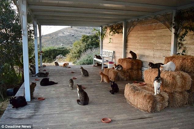 Работа мечты: в кошачий приют на греческом острове требуется смотритель на полгода 3