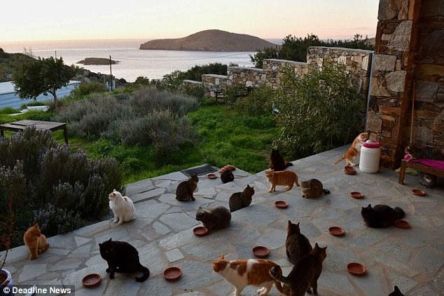 Работа мечты: в кошачий приют на греческом острове требуется смотритель на полгода
