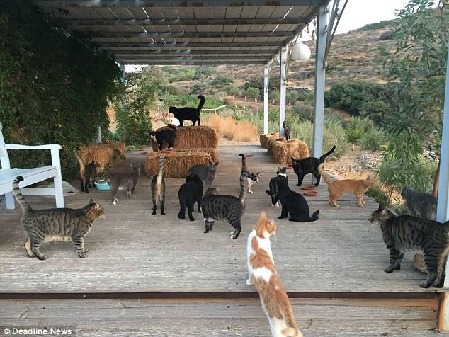 Работа мечты: в кошачий приют на греческом острове требуется смотритель на полгода 9