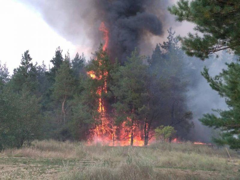 На Николаевщине горит лес. Площадь пожара – 3 га