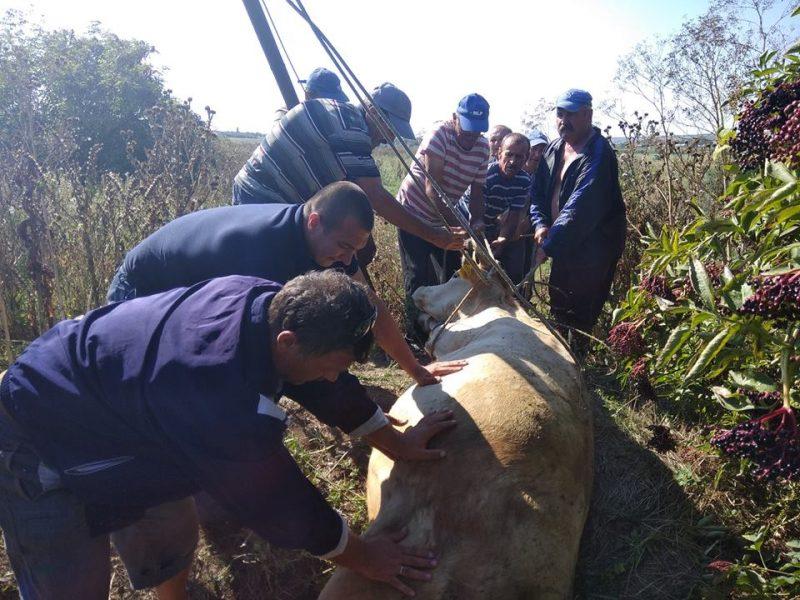 На Николаевщине спасателям пришлось доставать корову из колодца