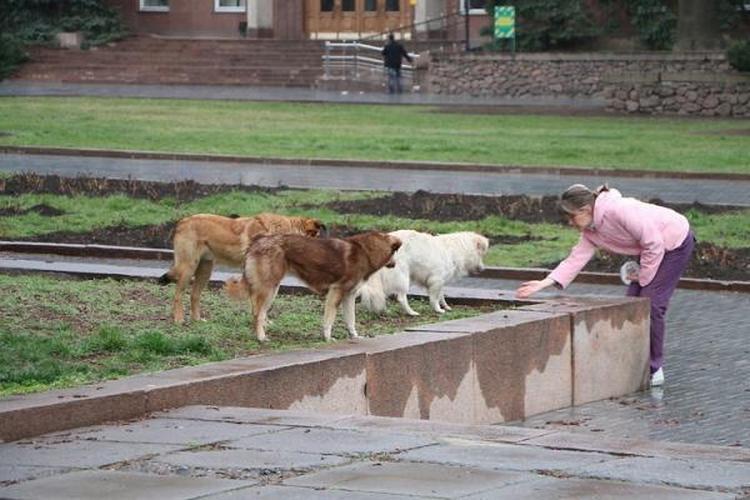 О бездомных собаках в Николаеве: с арифметикой и  без истерики