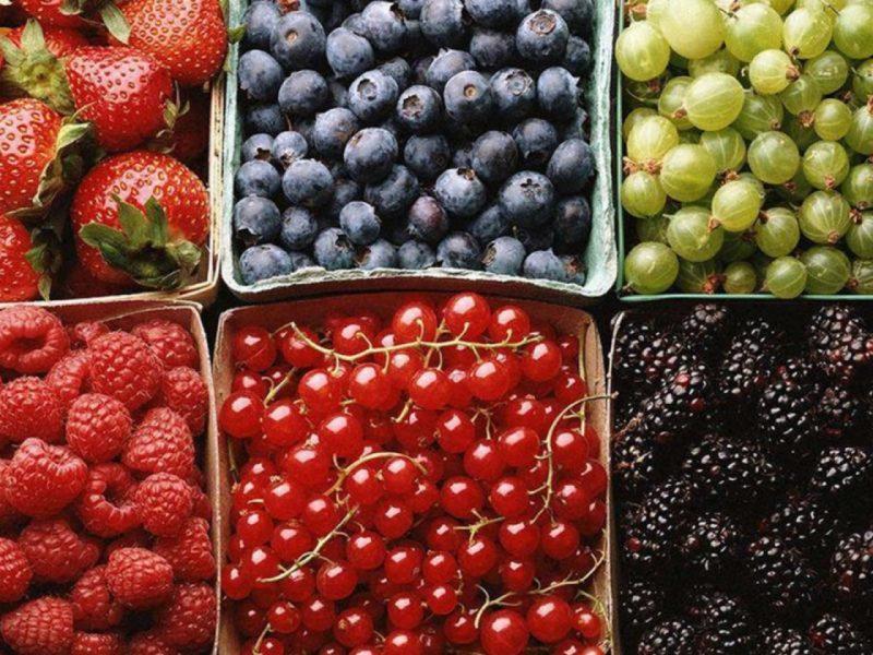 Финляндия запретила въезд сборщикам ягод из Украины