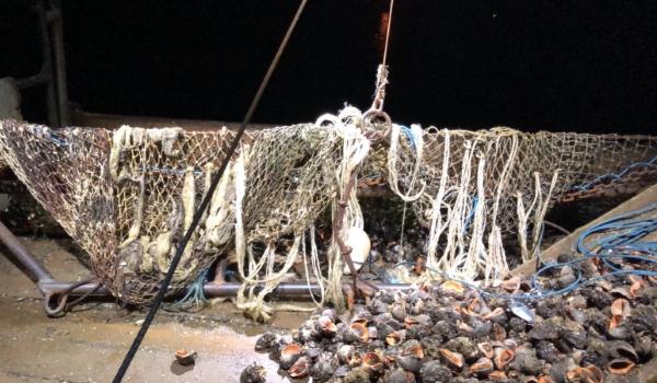 Более 4 тонн рапанов выловил браконьер в Коблево — на 1,6 млн.грн.