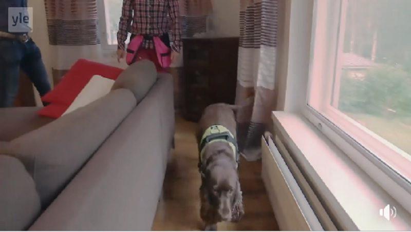 В Финляндии при сделках с недвижимостью все чаще привлекают собак  – они ищут скрытую плесень