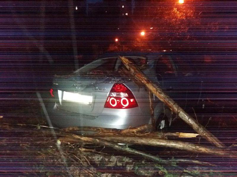 Непогода валила деревья на автомобили в Николаеве