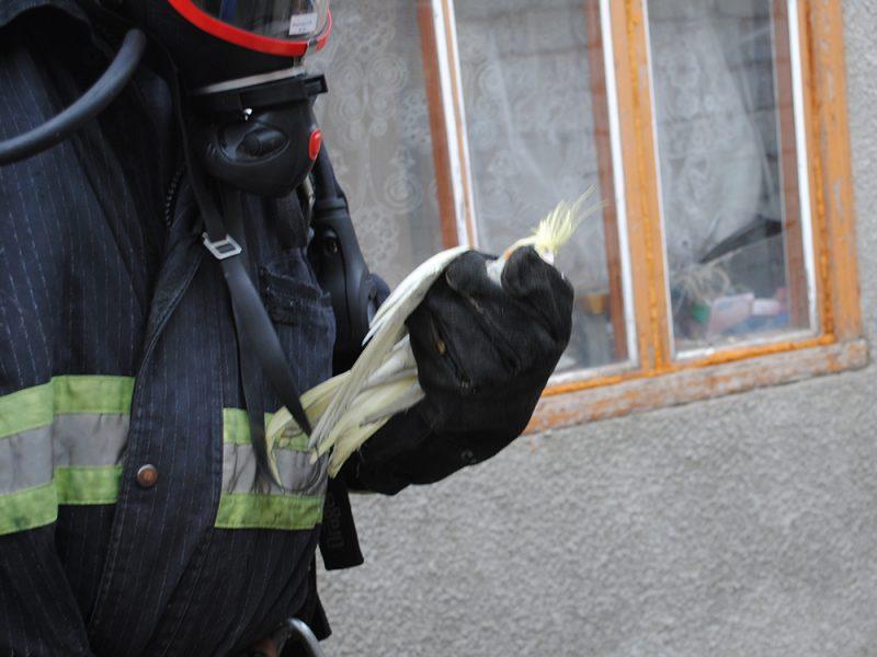 Пожар в Николаеве. Сосед вынес из дома детей, а спасатели – попугая