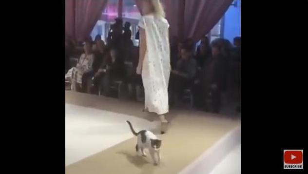 «Мы обществу нужны для красоты, коты»: в Стамбуле бездомная кошка приняла участие в модном показе Esmod International Fashion Show