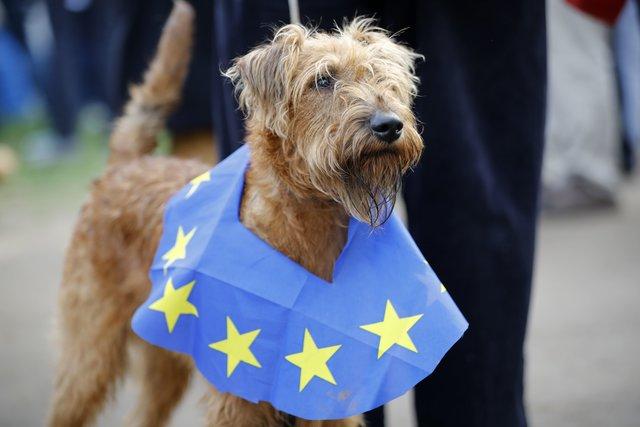 """В Лондоне прошел """"собачий"""" протест против Brexit"""